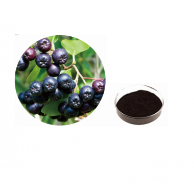 ISO Certificated 100% Natural Aronia Melanocarpa Extract Powder,20-60% anthocyanidin,Aronia Chokeberry Extract